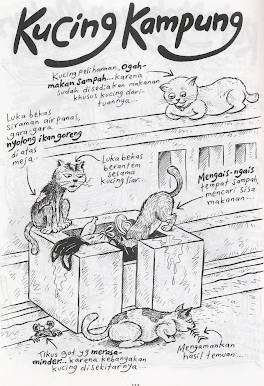 kucing-kampung