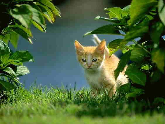 kucing kecil di balik semak