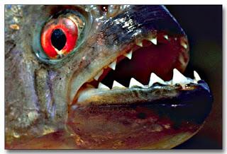 piranha po